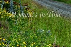 Montana-Trail-2