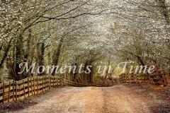 Timeless_panorama