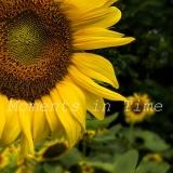 Summer-22x22-Square